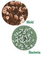 Basement mold causes allergies, mold, allergies, mildew, columbia, mo
